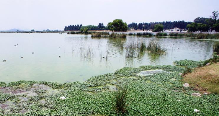 Algae in a groundwater-fed lagoon